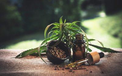 Le cannabis et le CBD en France et dans l'Union Européenne